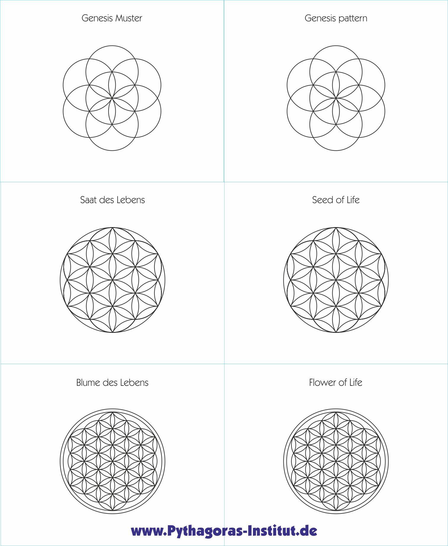 Die Symbole Genesismuster, Saat des Lebens und Blume des Lebens im Vergleich. Das Bild ist ein Ausschnitt der Lehrtafel