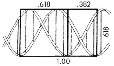 Der Goldene Schnitt in der Spirale der DNA